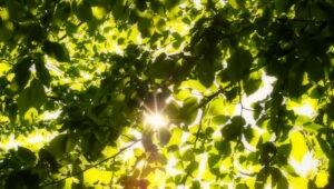Photo showing sunshine through the trees